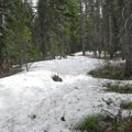 In May, the trail to Mirror Lake still had deep snow. Comment photo shared by Outdoor Project Giving Member Mary Ann Pastene.- But What are the Current Conditions?