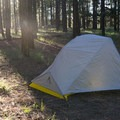 Waking up to a calm morning in the pines.- Gear Review: The North Face Fusion 2 Tent