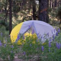 Another morning in the pines.- Gear Review: The North Face Fusion 2 Tent