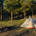 Camping in the cool pine forest.- Gear Review: MSR Hubba Hubba NX 2 Tent