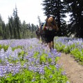 The approach hike to Broken Top through fields of lupine.- Head for the Hills: 6 Must Do Climbs!