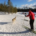 Cross-country skiing at Wanoga Sno-Park.- It's Cold! Explore These 8 Winter Adventures with Warming Huts
