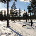 Wanoga Sno-Park Cross-Country Ski Loop.- Dog Etiquette on the Trail