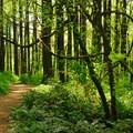 The Marquam Trail.- 5 Family-Friendly Trails Near Portland