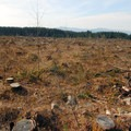 Clearcut in Clackamas County, Oregon.- Oregon, Home of the Clearcut