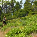 Fields of balsamroot and lupine leading up to Bald Butte.- 11  Epic Locations for Early Summer Wildflowers Near Portland