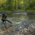 Playing in the mud is one of Albert's favorite things.- Dog Etiquette on the Trail