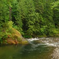 Salmon River riparian zone.- Salmon Spawning Here In The Pacific Northwest