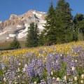 Mount Hood Wilderness: Paradise Park.- National Wilderness Preservation System