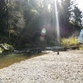 Youngs River Falls outside of Astoria.- Oregon's 30 Best Swimming Holes