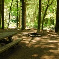 One of 14 walk-in campsites at Elk Creek Campground adjacent to the Wilson River.- Summer Along the Wilson River