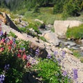 McNeil Point: Paintbrush and lupine along the tributary of McGee Creek.- Mount Hood: 5 Extraordinary Hikes