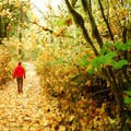 Maples dropping their leaves in the Oregon Coast Range.- 20 Great Fall Hikes in Oregon