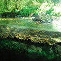 Cascade Streamwatch pavilion at Wildwood Recreation Site.- Salmon Spawning Here In The Pacific Northwest