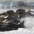 Harbor seal (Phoca vitulina) at Seal Rock.- Oregon Islands National Wildlife Refuge