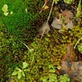 Reef-like moss diversity on the rocky slopes of Saddle Mountain.- An Ode to Moss!