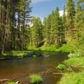 Metolius River.- Camping on the Metolius River