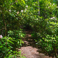Walk through tunnels of rhododendrons at Rhododendron State Park.- 10 Favorite State Parks in New Hampshire