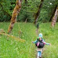 Lush green forests along the Hoh River in Olympic National Park.- The Basics of Backpacking with Kids