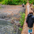 Stream crossing on the Hoh River trail in Olympic National Park.- The Basics of Backpacking with Kids