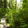 Hike along the South Canyon Trail at at Saint Edward State Park.- 5 Family-Friendly Trails Near Seattle