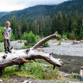 Backcountry campsite on Hoh River trail in Olympic National Park.- The Basics of Backpacking with Kids