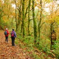 Upper Cape Horn Trail.- Best Fall Hikes Near Portland