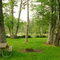 Camping under a shady grove of alder at Cape Disappointment Campground D- Best Coastal Campgrounds in Oregon and Washington