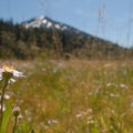 Trail to Todd Lake.- Kid-Friendly Hikes with Grown-Up Views