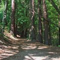 A walk through Bayshaw Trail, one of the Pogonip Trails.- 5 Great Ways to Explore Santa Cruz