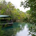 Homosassa Springs Wildlife State Park- The Best of Florida's State Parks