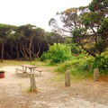 Typical campsite protected by shore pine at Barview Jetty County Park- Best Coastal Campgrounds in Oregon and Washington
