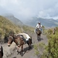Vaqueros pack supplies into the ranches of Colombia's Sierra Los Nevados as backpackers step off the trail to let them pass. Photo by Emily Downing.- Woman In The Wild: Emily Downing