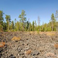 View from the interpretive trail at the Lava Cast Forest.- Newberry National Volcanic Monument
