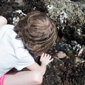 Peering in to hunt for tiny fish in tide pools along the Oregon Coast.- Exploring Oregon Coast Tide Pools