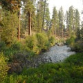 View of Tumalo Creek from Shevlin Park.- Wednesday's Word - Tumalo