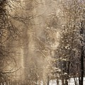 Look for light reflecting off of falling or windblown snow. - Essential Tips for Great Winter Photography