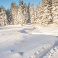 The start of Kitty's Cruise near the Clair Tappaan Lodge.- California Winter Adventures Beyond the Ski Slopes