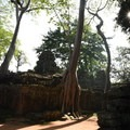Ta Prohm inner wall at sunrise.- A Guide to Exploring Angkor Archaeological Park