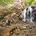 Heughs Canyon Falls along the Wasatch Front.- Wasatch Waterfalls