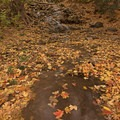 Play around with the fallen leaves in streams and rivers.- How to Photograph Autumn Colors