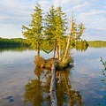 An island hammock.- A Beginner's Guide to Paddling the Boundary Waters Canoe Area Wilderness
