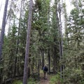 Trail from Cliff Lake to Hidden Lake.- 14 Hikes in Greater Yellowstone