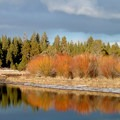 Willows along the Deschutes River, Upper Reach Trail.- 20 Great Fall Hikes in Oregon
