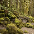 Moss laden rocks and forest along the Salmon River near Mount Hood.- An Ode to Moss