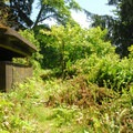 Bunker hidden along the Scarborough Hill Trail at Fort Columbia State Park.- Columbia River Harbor Defense System