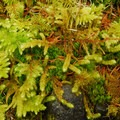 A variety of moss species.- An Ode to Moss
