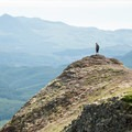 Saddle Mountain State Park, Oregon.- State and County Parks and Forests