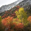 Nothing better than getting a fresh snowfall at the height of the color season.- How to Photograph Autumn Colors