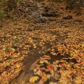 Autumn foliage swirling in a pool below a waterfall.- How to Photograph Waterfalls